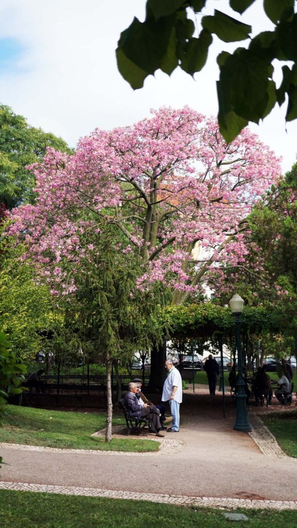 Mittags am Park