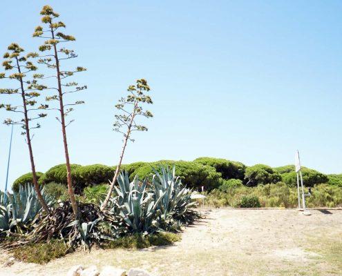 Puerto Sherry . . . ein wenig des grünen