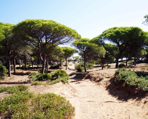 Cabo Trafalgar - Naturschutzgebiet