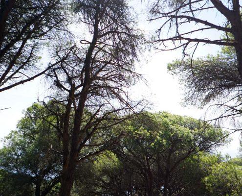 Trafalgar im Wald - Natur pur