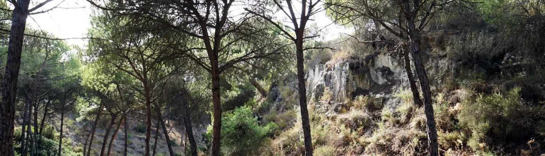 Mazagon - Donana - Naturschutzgebiet - Mitten im Wald
